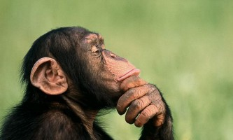 Спілкування у бонобо порівняли з криками немовлят