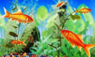 Загальні правила утримання акваріумних рибок