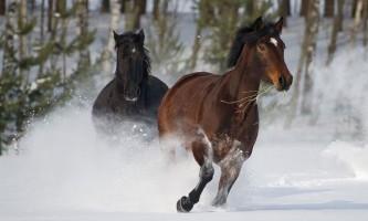 Спільний предок одомашнених коней жив близько 140 тисяч років тому
