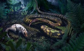 Спільний предок всіх змій вів нічний спосіб життя і полював на велику здобич