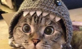 Чарівна нала - найвідоміша кішка в instagram