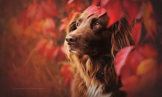 Чарівні фотографії собак серед австрійської природи