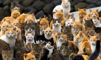 Черговий японський «острів кішок»
