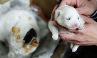 Черговий випадок народження кішкою цуценя