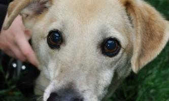 Одеські волонтери допомогли собаці-інваліду
