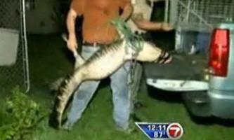 Однорукий житель флориди врятував алігатора