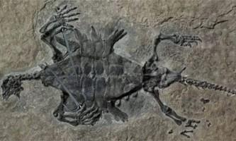 Одонтохеліс - древній вимерлий вид черепашок
