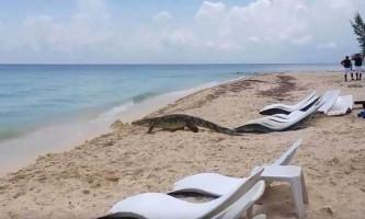 Величезний крокодил навів паніку на жвавому пляжі