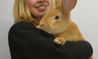 Величезний кролик шукає новий будинок