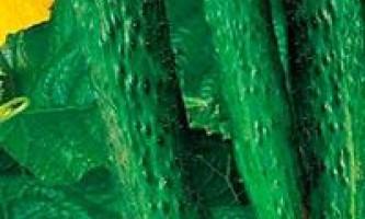 Огірок пекінський