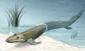 Полювання на відсутні ланки еволюції триває