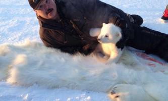 Мисливець застрелив ведмедицю, але зміг врятувати від вірної смерті її дитинча