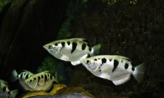 Виявилося, що риби здатні запам`ятовувати людські обличчя