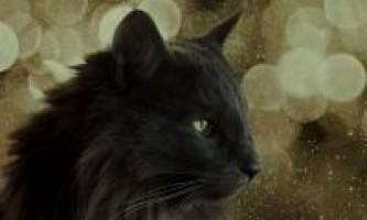 Забарвлення норвезьких лісових котів