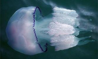 Небезпечні тварини чорного моря