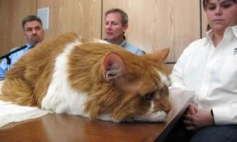 Операція кота обійшлася його власникам в 20 тисяч доларів