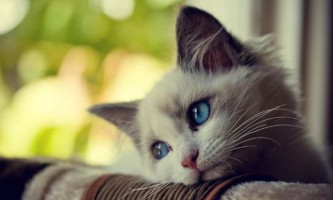 Операція по стерилізації котів - всі аргументи за і проти