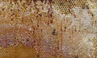 Опис симптомів та методів лікування нозематозу у бджіл, профілактичні заходи