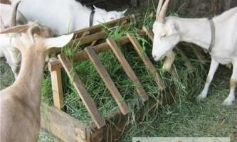Саморобні годівниці для кіз