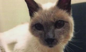 Визначено найстаріший кіт у світі