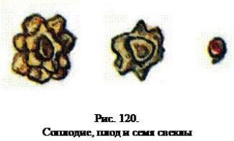 Визначення коренеплодів по насінню