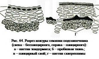 Вдаримо соняшником по українській землі