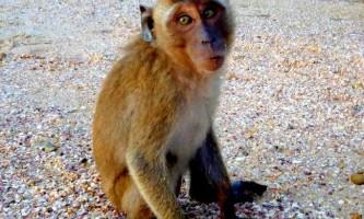 Осідлавши собаку мавпа стала зіркою інтернету