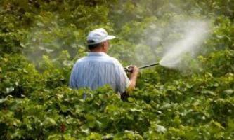 Осіння обробка винограду: захищаємо майбутній урожай