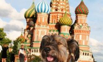 Оскар - собака мандрівник