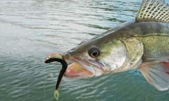 Оснащення дроп-шот для лову риби