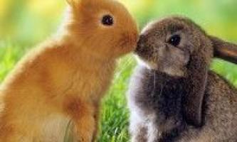 Основні породи кролів