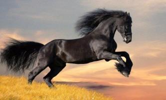 Основні породи коней