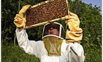 Основні правила змісту бджіл