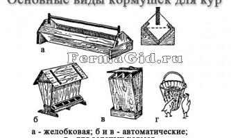 Основні види і вимоги до годівниць для курей і їх самостійне виготовлення