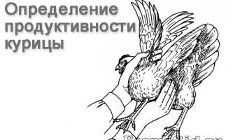 Основи побутового і медичного обслуговування за курми несучками, вимоги до пташника і інвентарю