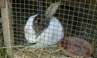 Основи утримання кролів в клітках, їх види і конструкції