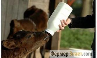 Особливості використання замінників цільного молока для годування телят