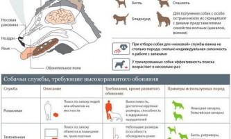 Особливості нюху собак