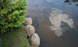 Особливості ставкового рибництва і методика розведення риби в умовах рибних господарств