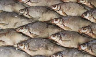 Особливості технології приготування в`яленої риби в домашніх умовах