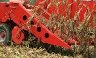 Особливості збирання кукурудзи