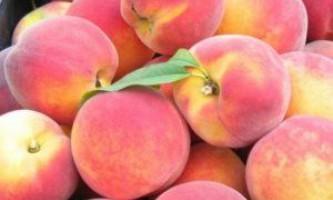 Особливості весняної обрізки персика