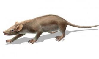 Останки ссавця дозволили переосмислити еволюційну історію хутра