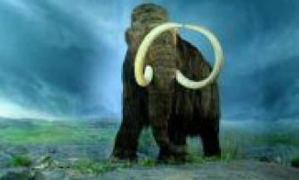 Останки рідкісного південного мамонта виявлені в кабардино-балкарії