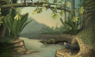 Останки найраніших предків ссавців виявлені в китаї