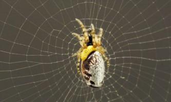 Оси перетворюють павуків в зомбі-трудоголіків
