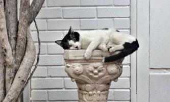 Від котів можна багато чому навчитися
