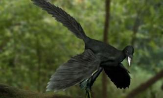 Від рептилії до птаха (археоптерикс)