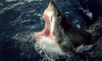 Відпочивальниця на острові пхукет австралійка постраждала від нападу акули