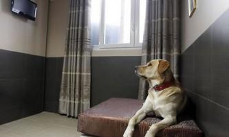 Готель для собак acutel dogs в парижі